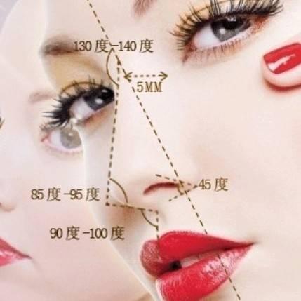 鼻骨结构图解大全图片
